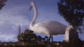巨大な白鳥が襲来!? Elliot Dear監督によるKing Creosote & Jon Hopkinsのシュールな特撮MV「Third Swan」