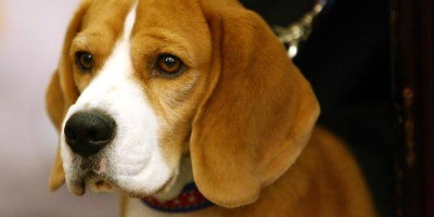 Holidays and pets: 4th of July safety tips for pets