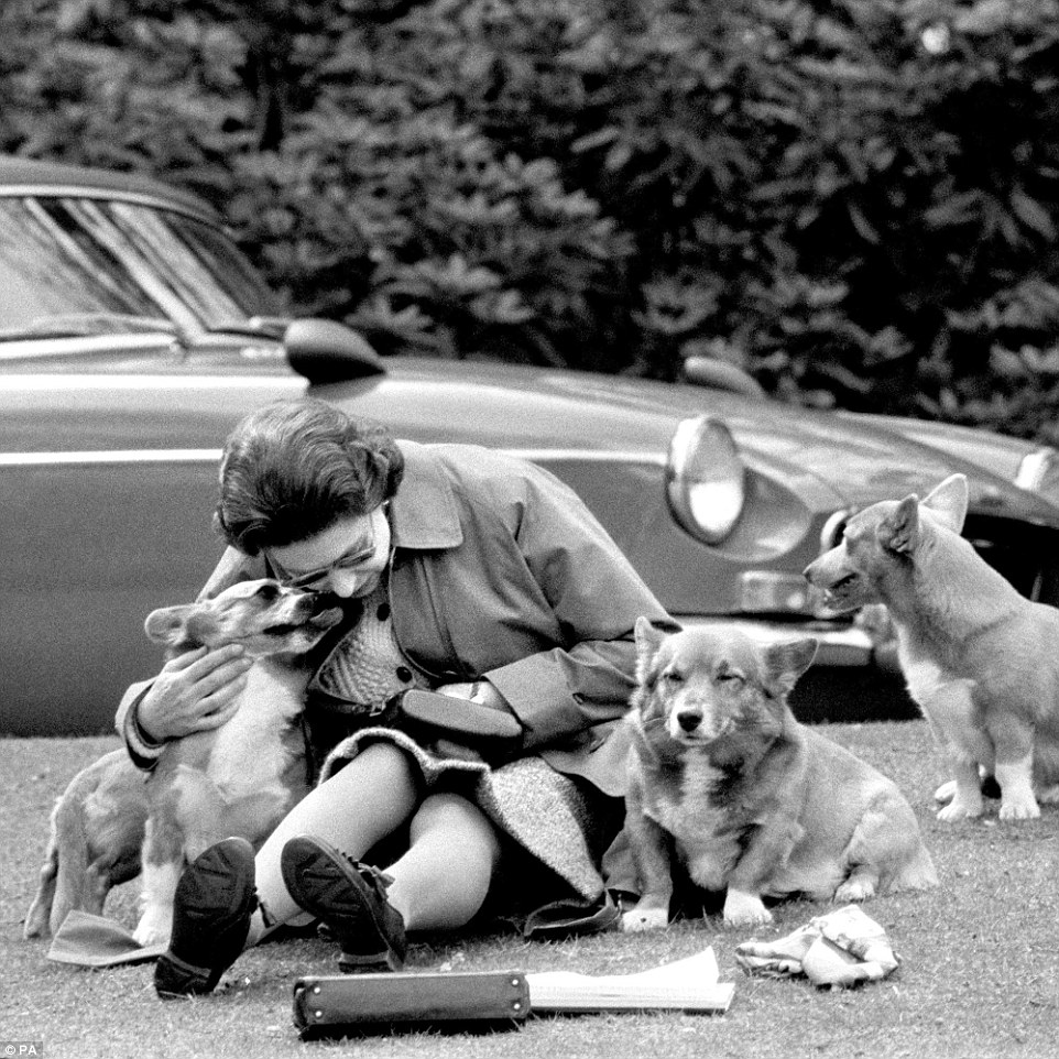 Chilling with the corgis: The Queen sitting with her corgis, at Virginia Water, to watch competitors, including Prince Philip, in the Marathon of the European Driving Championship on May 12, 1973. She has owned more than 30, many of them direct descendants from her first corgi Susan. Now she has only two, Holly and Willow, but will not being getting any more as she does not want to leave any young dogs behind