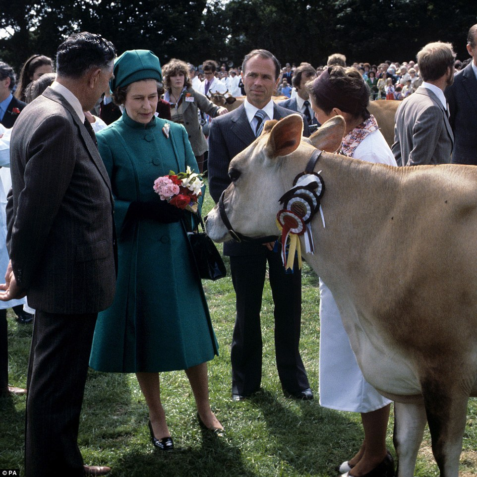 Nice to meet you! The Queen with a Jersey cow she was presented with at the Country Show at Le Petit Catelet, Saint John, Jersey, on June 27, 1978. An exotic range of live animals have been given to the Queen as gifts over the years, including a canary from Germany, jaguars and sloths from Brazil, two black beavers from Canada, two young giant turtles from the Seychelles and an elephant called Jumbo from the Cameroon