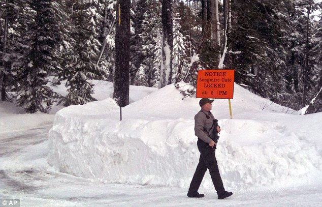 On patrol: A park ranger on the lookout at Mount Rainier National Park where a body of Barnes was found face down in the snow