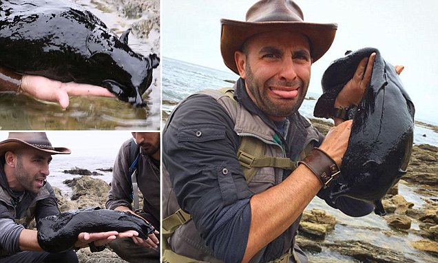 Discovery Channel host finds massive black slug as big as a small dog lurking the tide