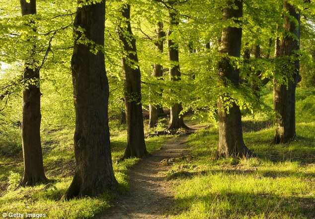 There's increasing evidence to show that trees are able to communicate with each other