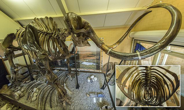 Skeleton of 50,000-year-old woolly beast to fetch a record £200,000 at auction