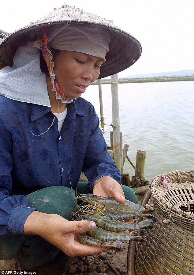 Vietnam is the largest source of imported prawns in Australia and they are sold in major supermarkets like Woolworths and Coles