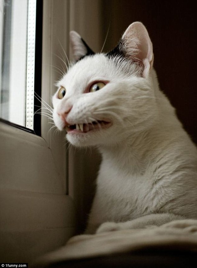 You wouldn't want to come home to this grimacing cat staring out of the window