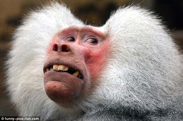The thought 'stop trying to take my photo' seems to be the only thing on this monkey's mind