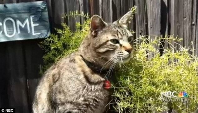 Authorities say Farmer may have killed up to 16 cats. Only the remains of four of the animals were ever found