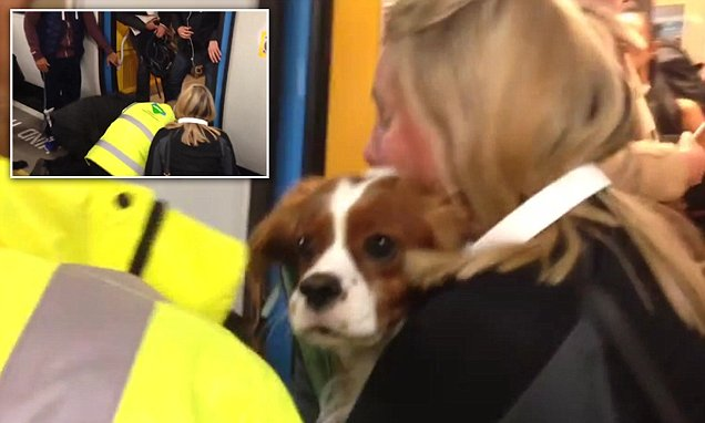 Elephant and Castle becomes scene of a rescue as a dog is pulled from the tracks