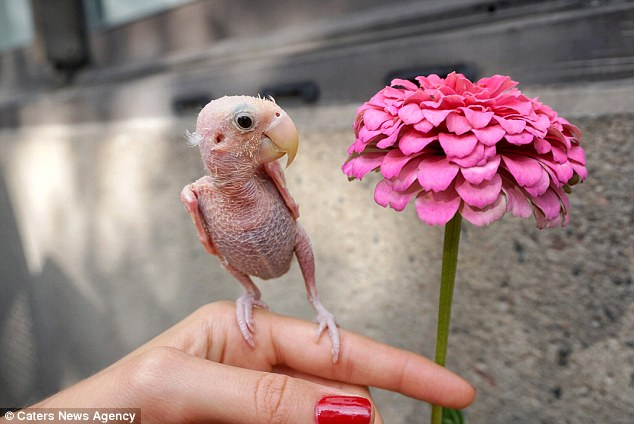 Animal lover Isabella, who also has a pet dog, said she fell in love with unusual bird Rhea, who is two-and-a-half years old and just two inches tall, from the moment she saw her - despite her rare illness
