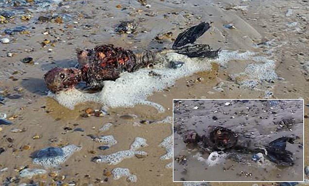 UK man stumbles across gruesome remains that look like a 'dead mermaid' on deserted beach