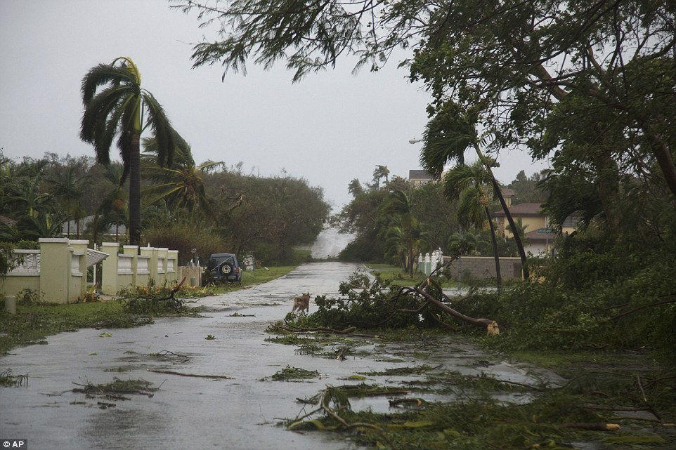 The Bahamas National Emergency Management Authority said on Thursday that Nassau, the most populated island of New Providence in the central Bahamas, is getting the worst of the storm. Pictured are downed trees in Nassau