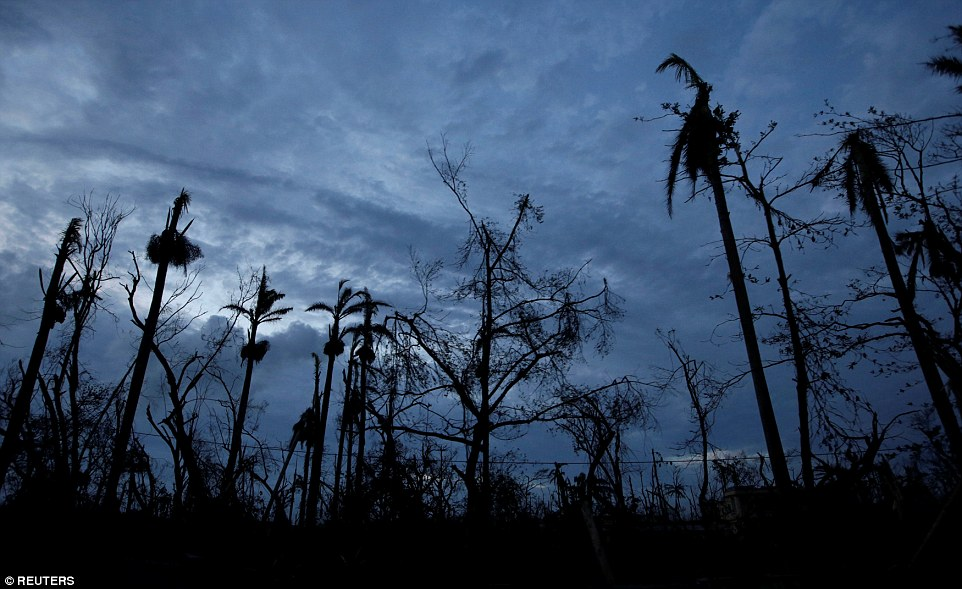 The storm has already torn through Haiti and caused at least 299 deaths on the country's southwest peninsula and in the Dominican Republic, with the number expected to rise in coming days. Pictured are what remains of some trees in Les Cayes, Haiti