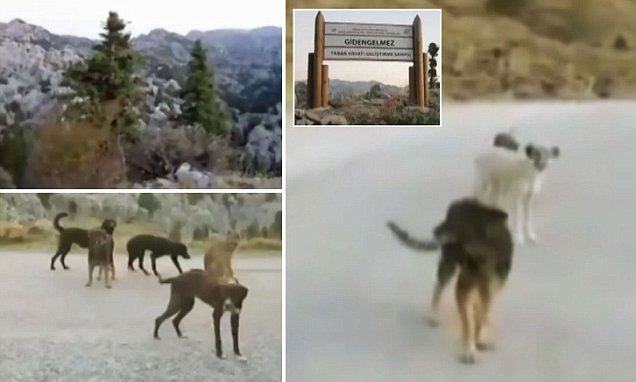 Unwanted dogs struggle to survive in remote Turkish mountain pass