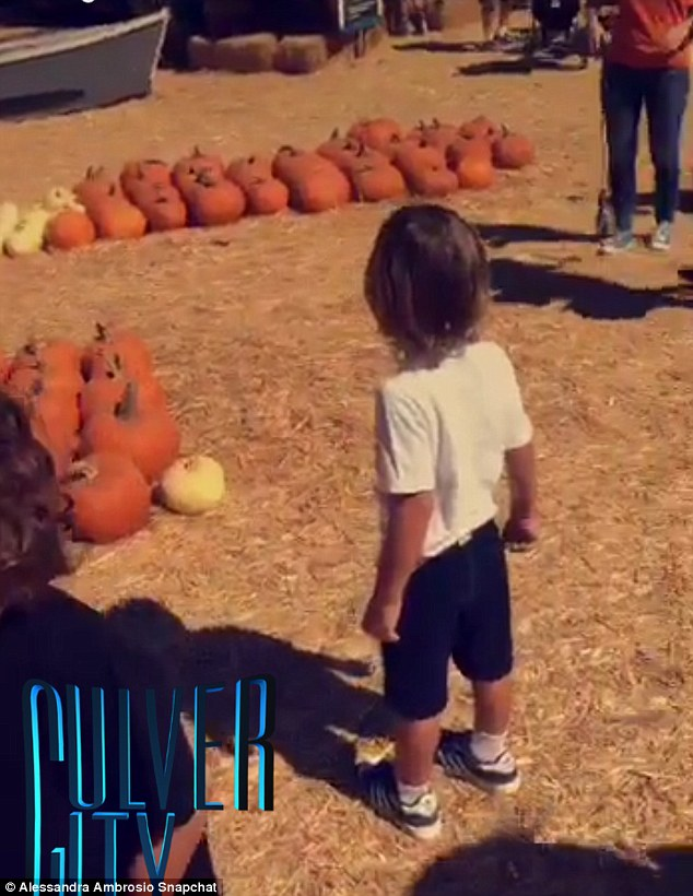 Carving time: Noah approached a group of pumpkins as he carefully chose which one to take home