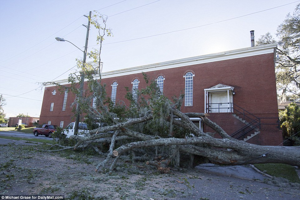 Felled trees were commonplace across Jacksonville as the mass clean-up job commenced on Saturday