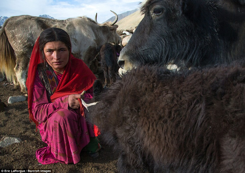A Wakhi nomad woman with her yak in Afghanistan. PhotographerEric Lafforgue visited these little-known lands in August to see the land the time forgot