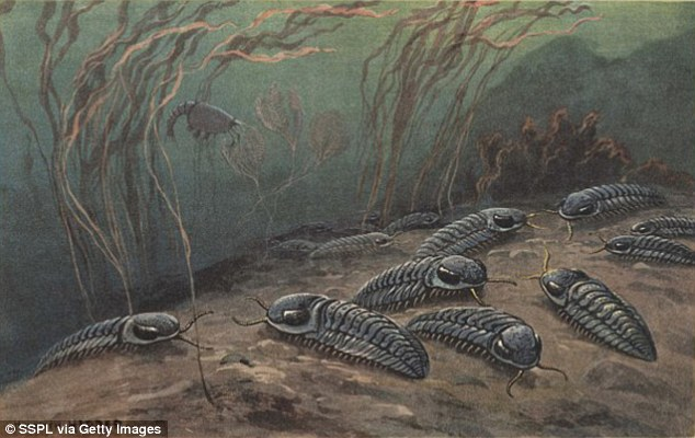 It was thought that the event wiped out 96 percent of marine species, including trilobites (pictured), and 70 percent of life on land. New calculations estimate the losses may have been much lower, with the actual extinction rate for marine life at around 81 percent