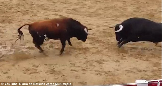 Shocking video has emerged of two bulls colliding in a fatal clash of heads at an arena in northern Spain