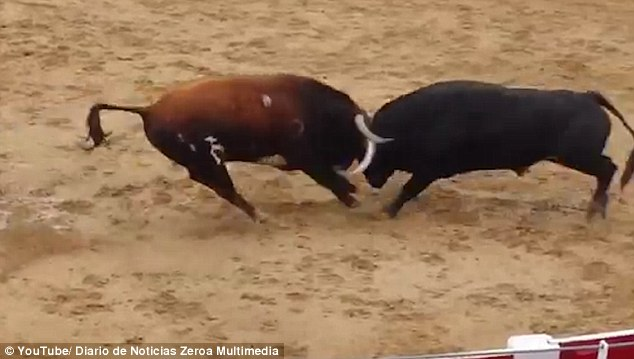 The distressing accident occurred as the two half-ton animals were let loose in front of crowds at Sanguesa in Navarra