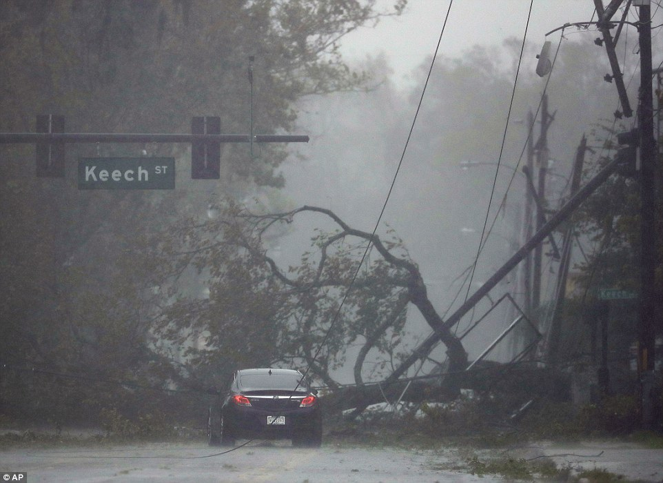 Road hazard: A car drives past a downed tree after Matthew created havoc in the Daytona area