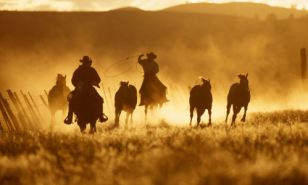 Looking to draw up a will? Make sure you're not taken for a ride by cowboy will writers