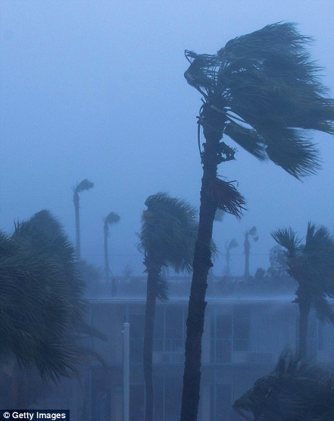 Palm trees blow in the rain and wind in Ormond Beach