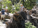 Ryder Delaney, far right, age 9, climbs on the uprooted trunk of large tree toppled in Forsyth Park as his father, Nigel Delaney, hold the hand of the boy's younger sister, Yasmin, in Savannah, Ga., on Monday, Oct. 10, 2016. Hurricane Matthew bushwhacked Savannah when it swiped the Georgia coast over the weekend, causing extensive damage to the city's signature tree canopy. (AP Photo/Russ Bynum)
