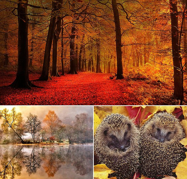 Photos celebrate autumn's crimson leaves, misty mornings and wildlife