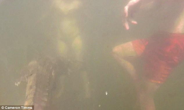 Mark Timms said the family were unaware the animal was swimming next to them in the murky water, and only realised when they checked a GoPro Cameron was wearing