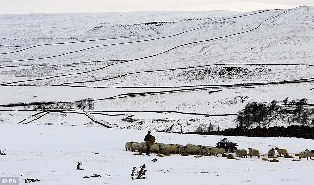 Farmers in the Pennines get food to their livestock out on the snow near Brough in Cumbria, as the winter cold snap continues to bite