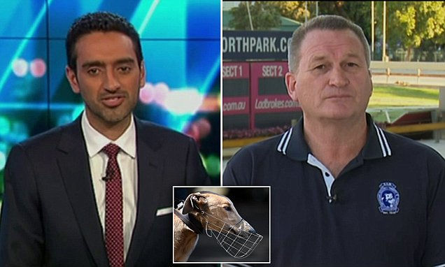 Waleed Aly slams greyhound trainer after Mike Baird changes his mind on the industry