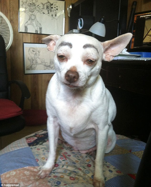 One little dog didn't appear too impressed with their thick drawn-on eyebrows