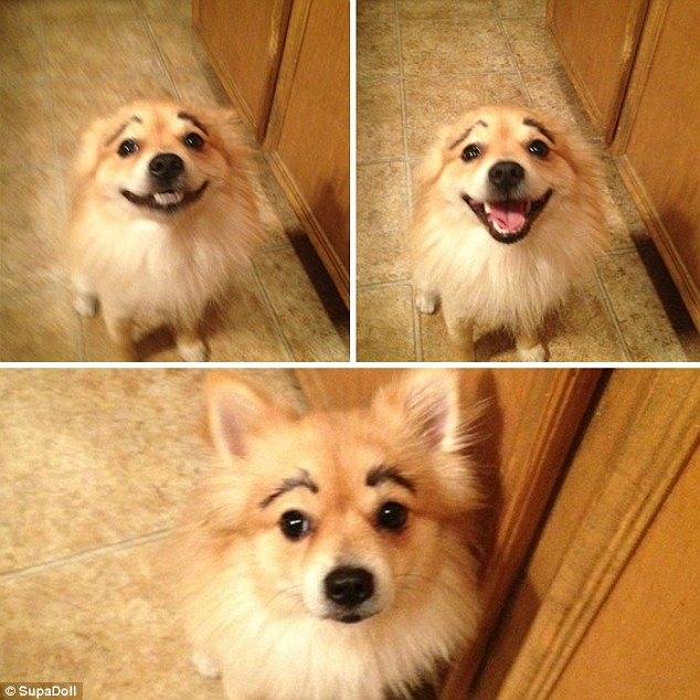 The top two photos might be of the dog before they saw their eyebrows and the bottom after they have seen the results