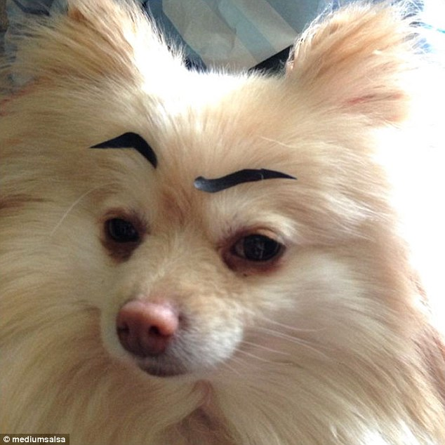 What you looking at? asks one dog with an eyebrow raised