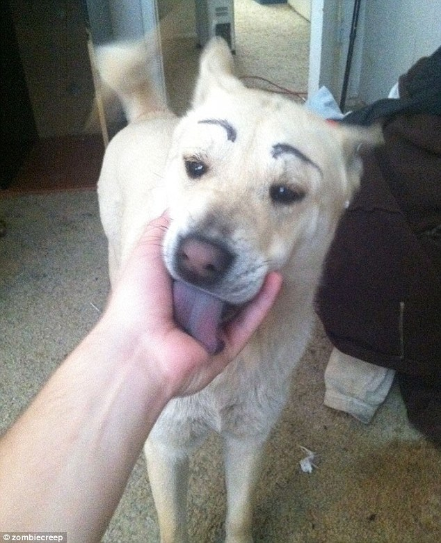 Not fussed about their eyebrows, one dog just wants to lick their owner's hand instead