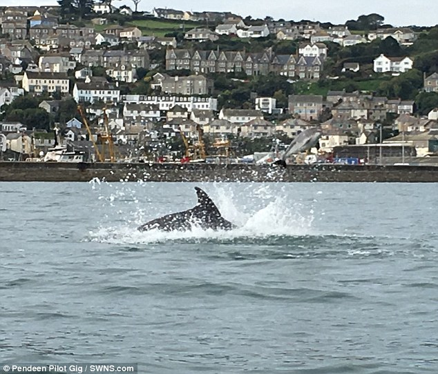 Stunned rowers came across the scene while out on the water for a social Sunday exercise and initially thought they had witnessed a dolphin giving birth