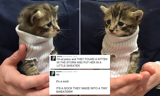 Kitten saved from Hurricane Matthew is adopted and wears SWEATER made from a sock