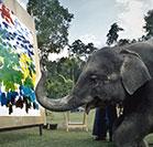 Elephants create beautiful paintings
