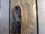 This Monday, Oct. 10, 2016 photo taken in Honolulu shows Dee Decasa's replacement Galaxy Note 7 smartphone one day after the phone released smoke and sizzled...