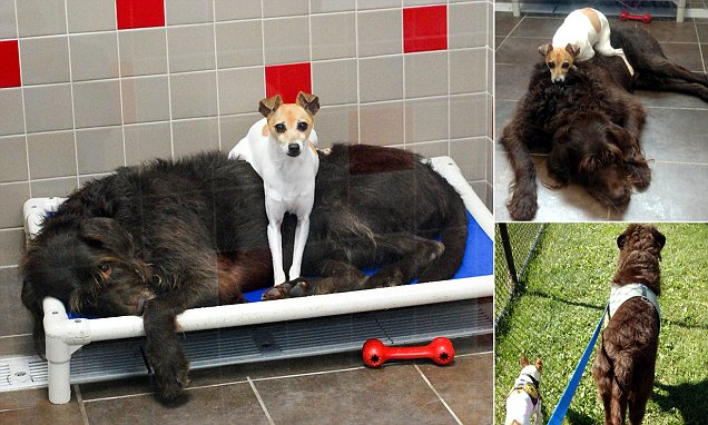 Adorable dogs are adopted together after they can't stop cuddling in shelter