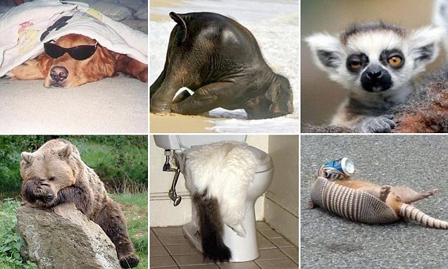 Funny photos make animals look as though they're suffering with hangovers from hell