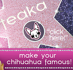 submit your chihuahua picture