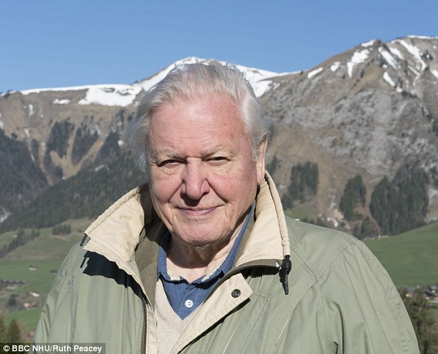 Number one fan: Howard urged his followers to tune into the legendary Sir David Attenborough whose new show, Planet Earth 2, debuted on the BBC on Sunday