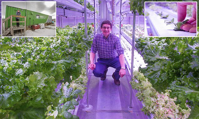 Alaska's Kotzebue town turns to hydroponics to grow green vegetables for the first time