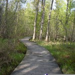 Boardwalk_Trail