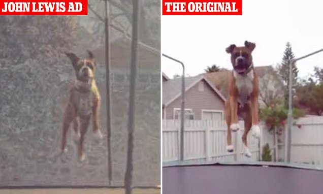 John Lewis Christmas advert 'copied' viral YouTube video of dog jumping on a trampoline