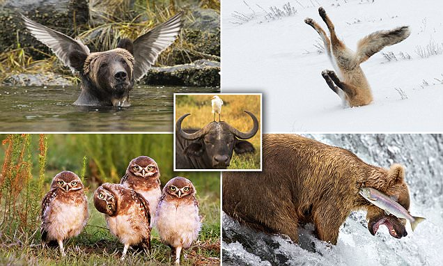 Winners of the 2016 Comedy Wildlife Photography Awards revealed