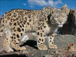 PLANET EARTH II - EPISODE 22016-11-13-20h48m28s693.png