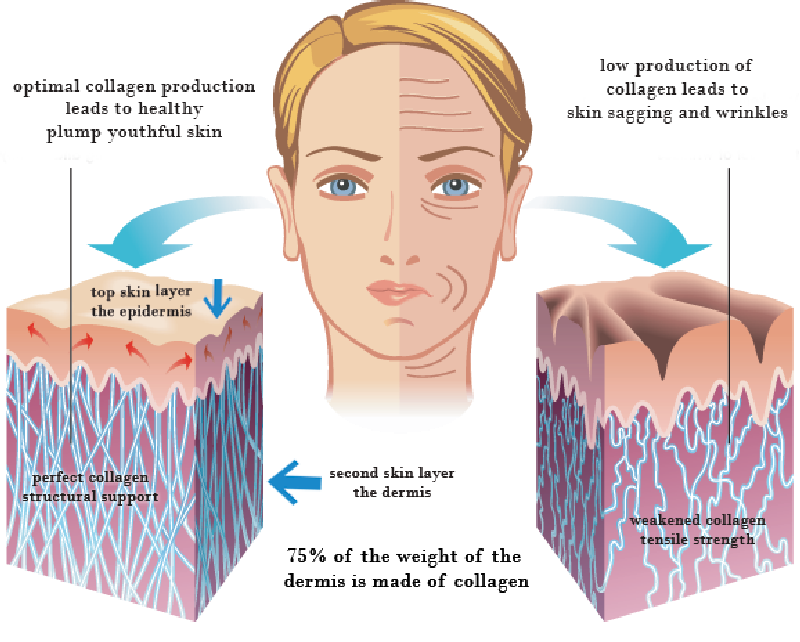 skin-collagen